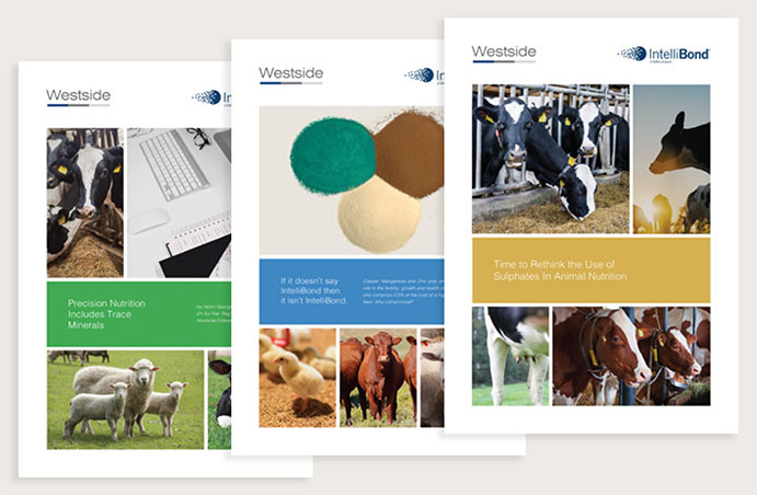 Our Three Technical Brochures About IntelliBond